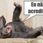 Idéias erradas que os Americanos tem a respeito do Brasil